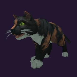 WoW Haustier kaufen: Dreifarbige Katze - World of Warcraft Pet