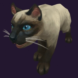 WoW Haustier kaufen: Siamkatze - World of Warcraft Pet