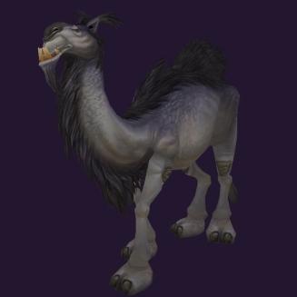 WoW Haustier kaufen: Zwergkamel - World of Warcraft Pet